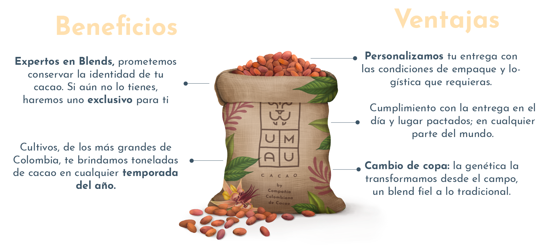 Sobre UMAU Cacao - Infografico