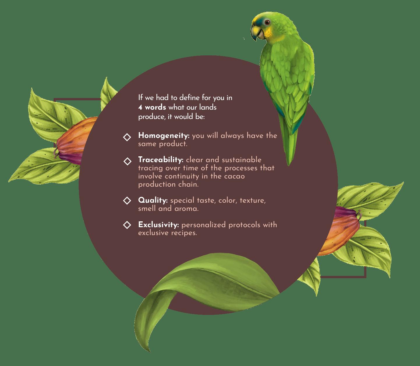 ¿Qué define el cacao de Umau? - Umau Cacao - EN